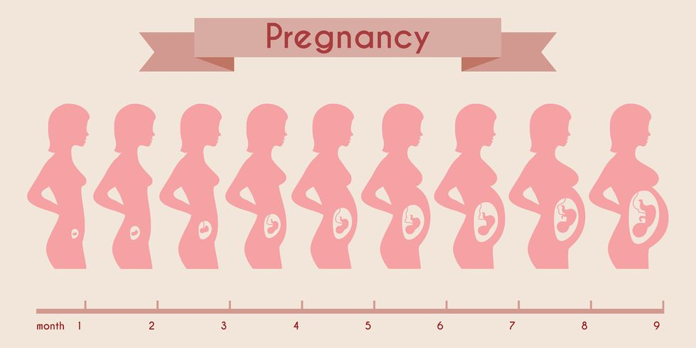 1 Month Pregnant Baby Size - Learn About it Here